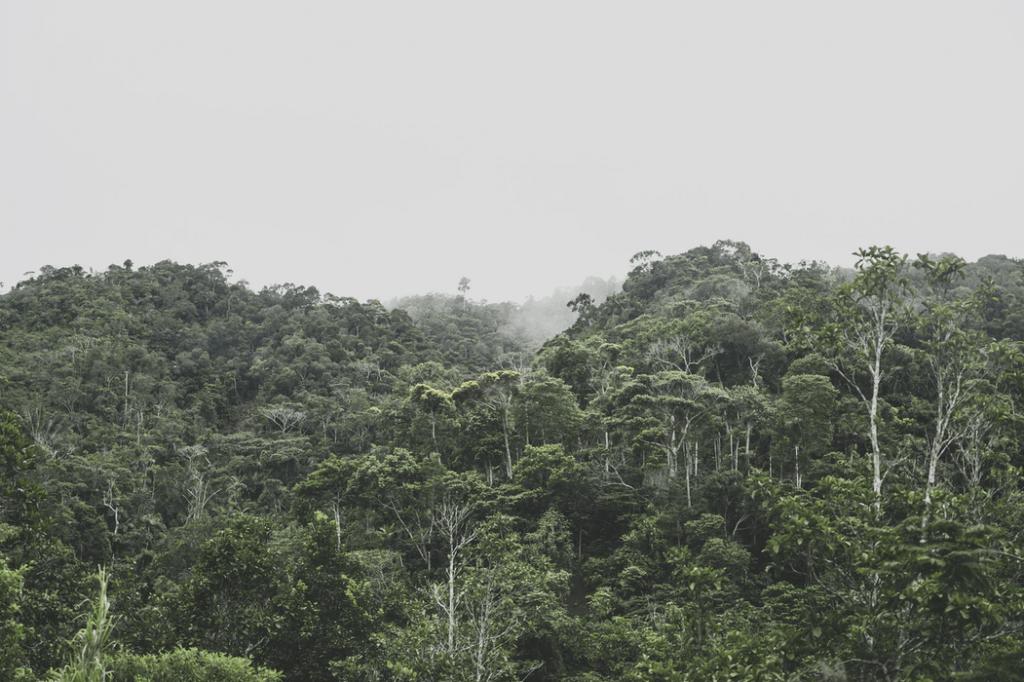 selva peruana - consecuencias deforestación