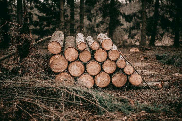 frenar la deforestación