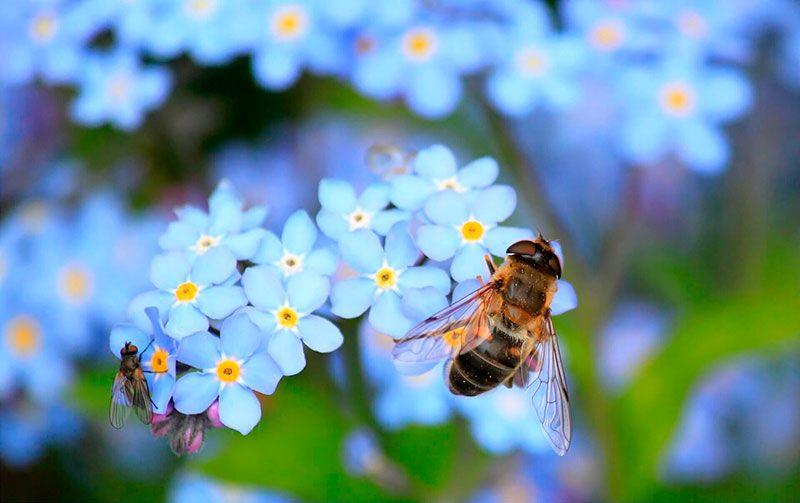 una abeja liba de una flor en su biodiversidad