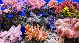 arrecifes de coral que guardan a especies marinas