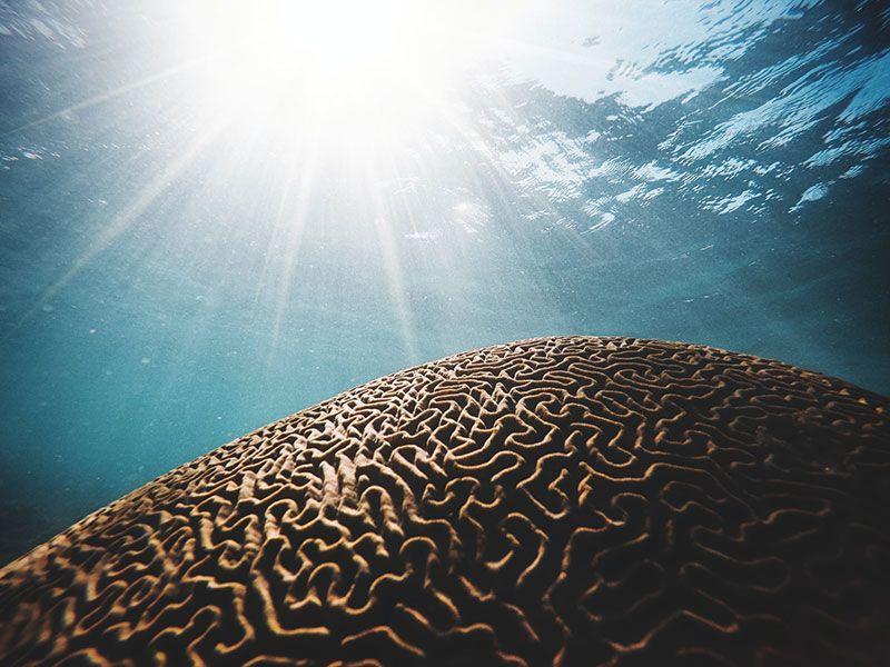 arrecife con forma de cerebro en aguas poco profundas