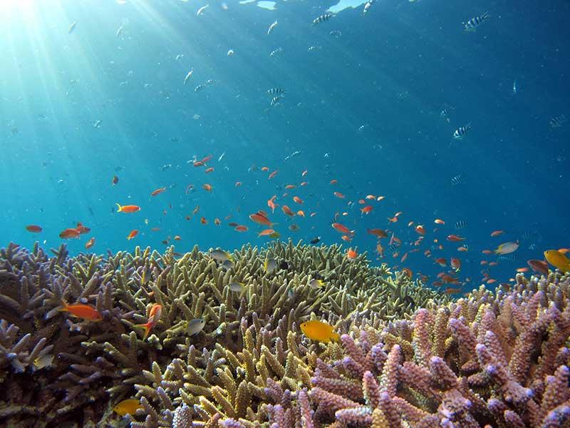 arrecifes de coral donde viven cientos de especies marinas