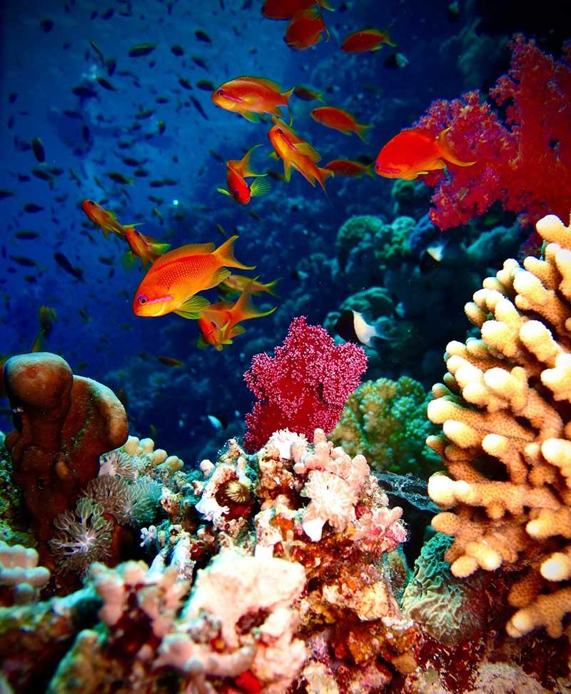 pes nadan en un arrecife en el mar rojo