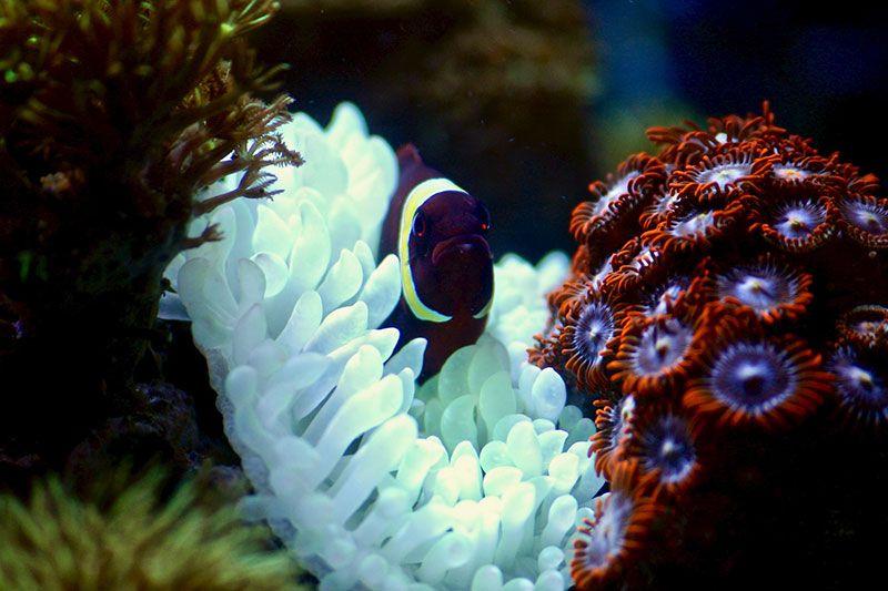 pez en coral blando