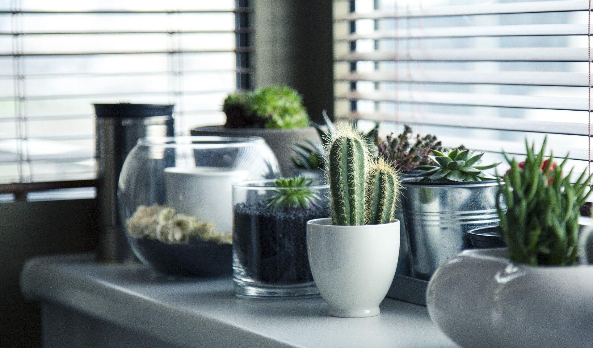 cáctus flores para plantar en casa resistentes