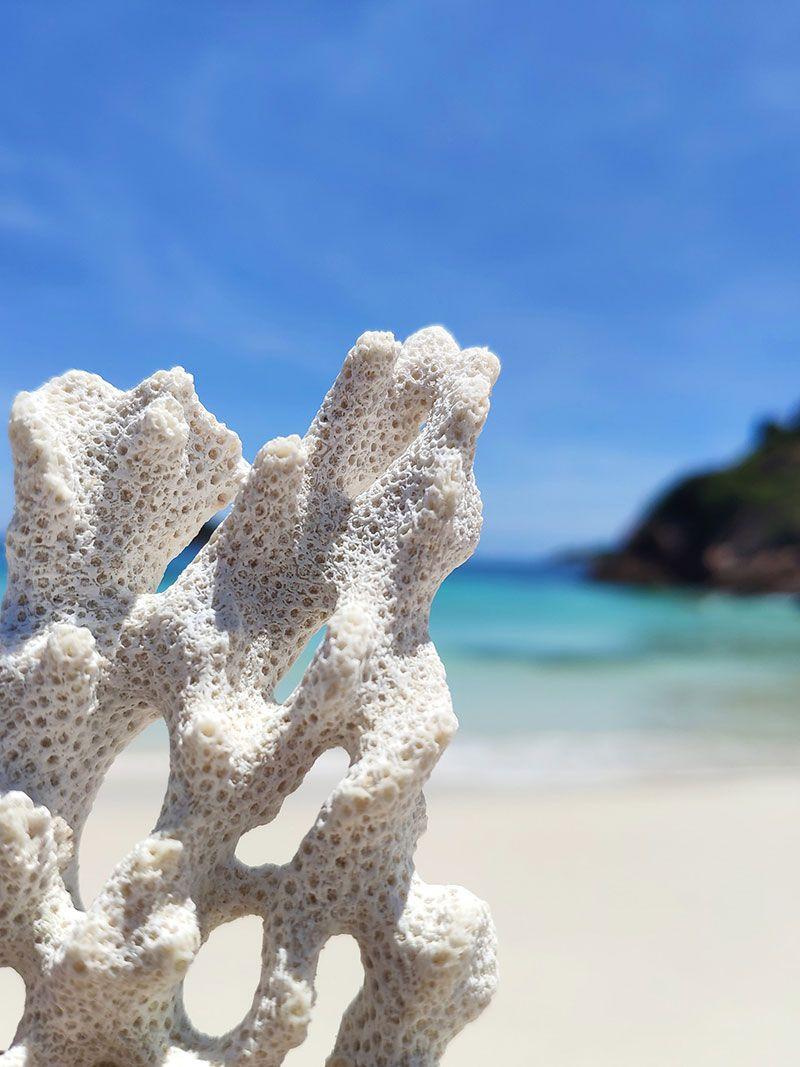 coral blanqueado frente al mar