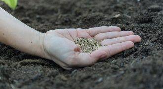 un hombre enseña semillas en su mano para un huerto en casa