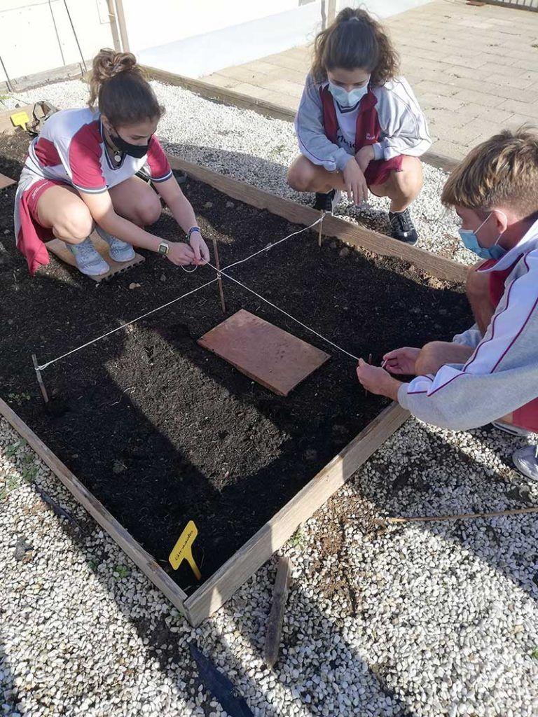 niños cultivando hortalizas en un huerto escolar