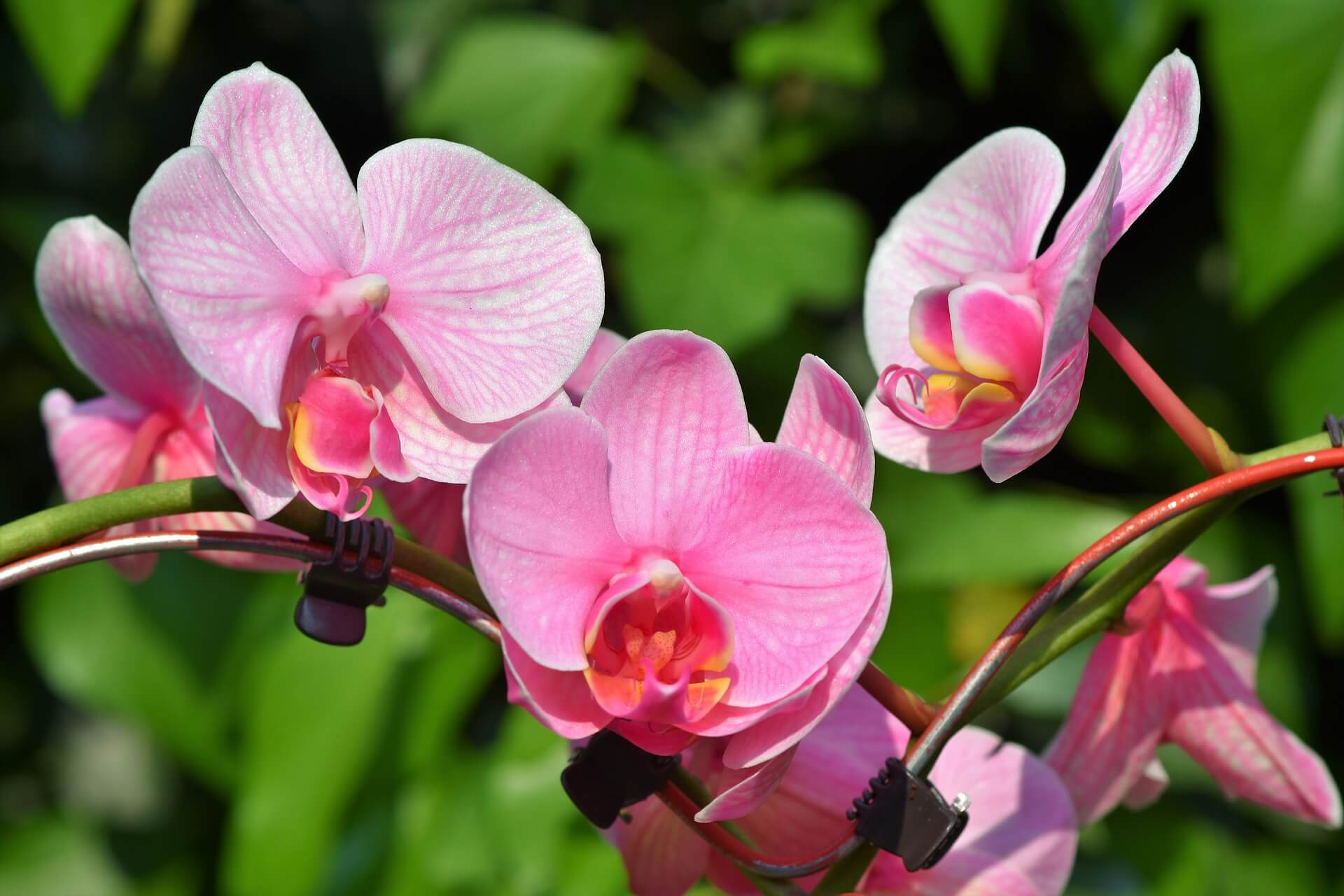 orquídeas flores para plantar en primavera