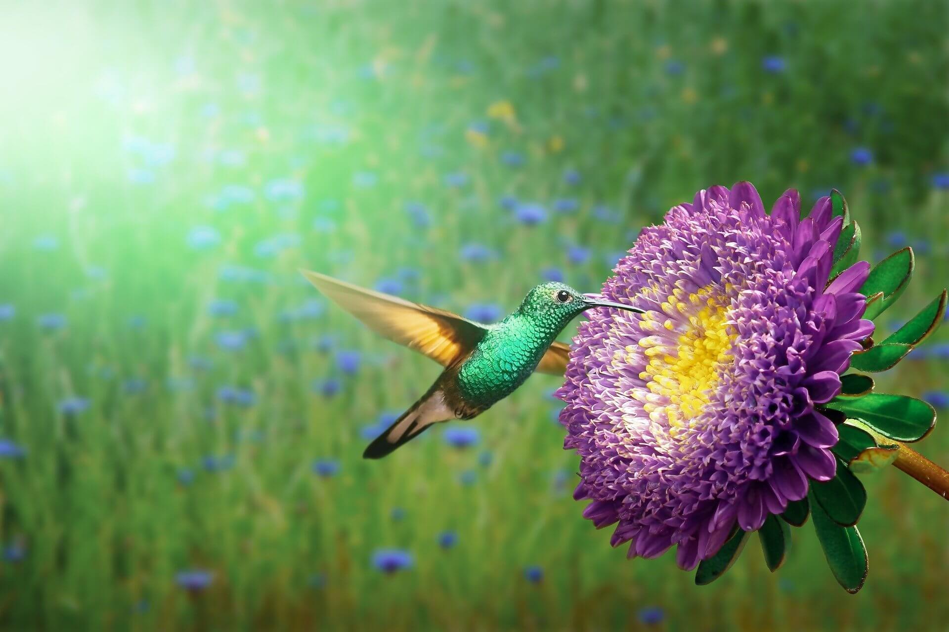 colibrí libando en una flor