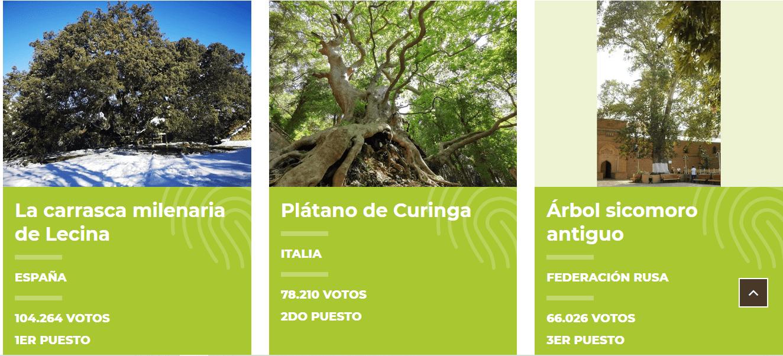 imagen de premiación mejor árbol europeo 2021