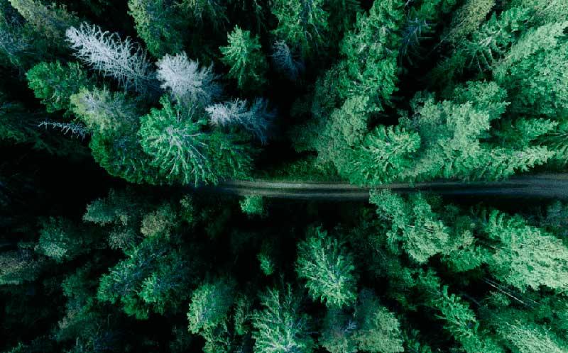 imagen de un bosque visto desde arriba